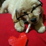 hipster puppies 4