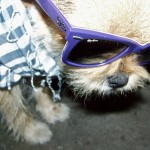 hipster puppies 6